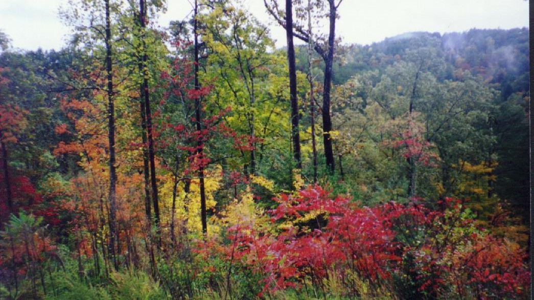 Fall Colors at Wilderness Lake Vacations